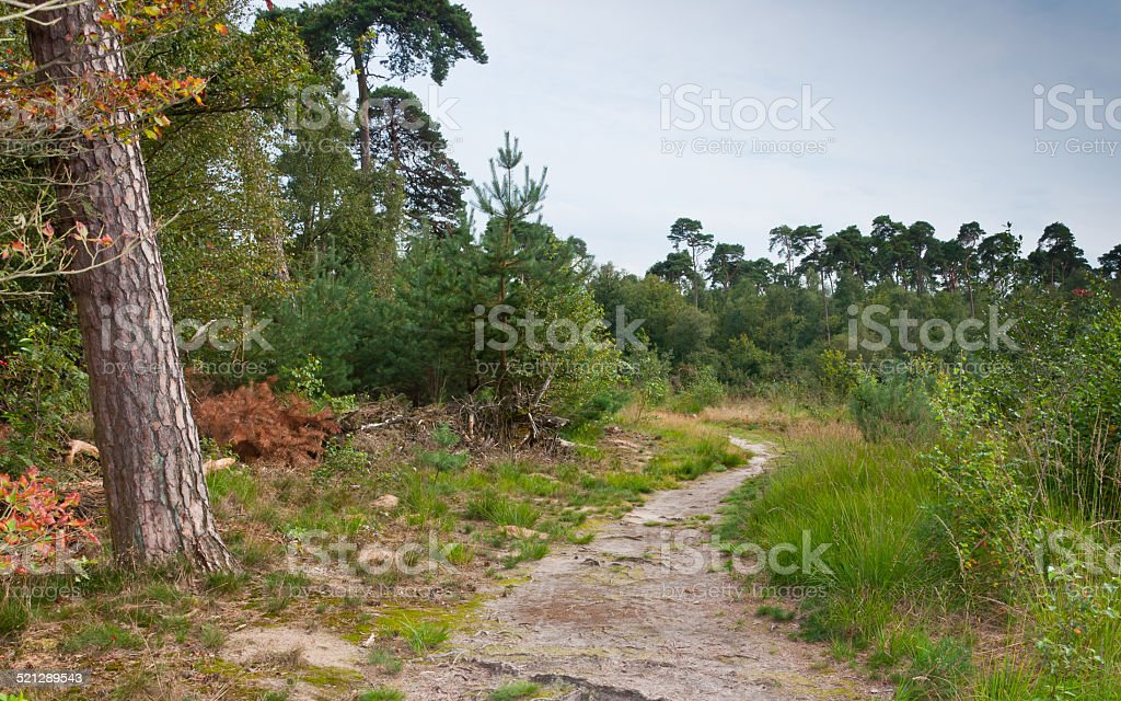 Small sandy path in the forest stock photo