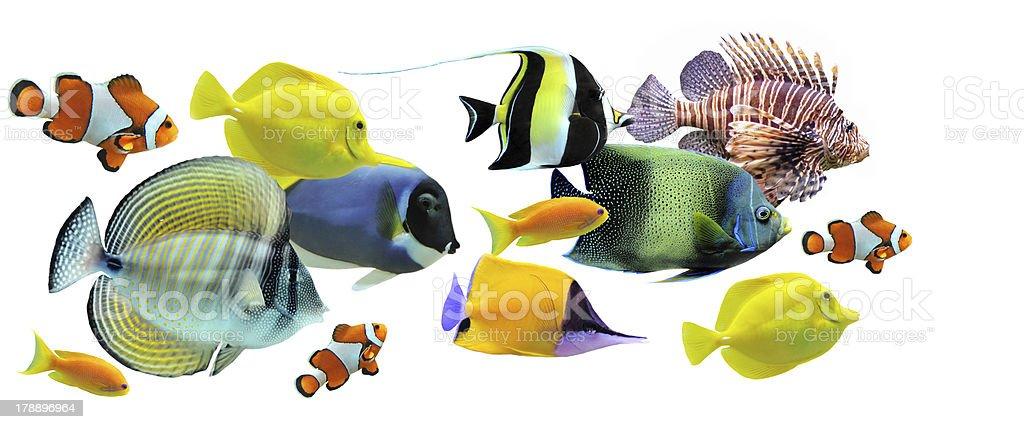 Small school of diverse, multi- colored fish stock photo