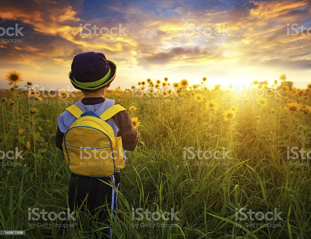 Small schoolboy in field with sunflowers stock photo