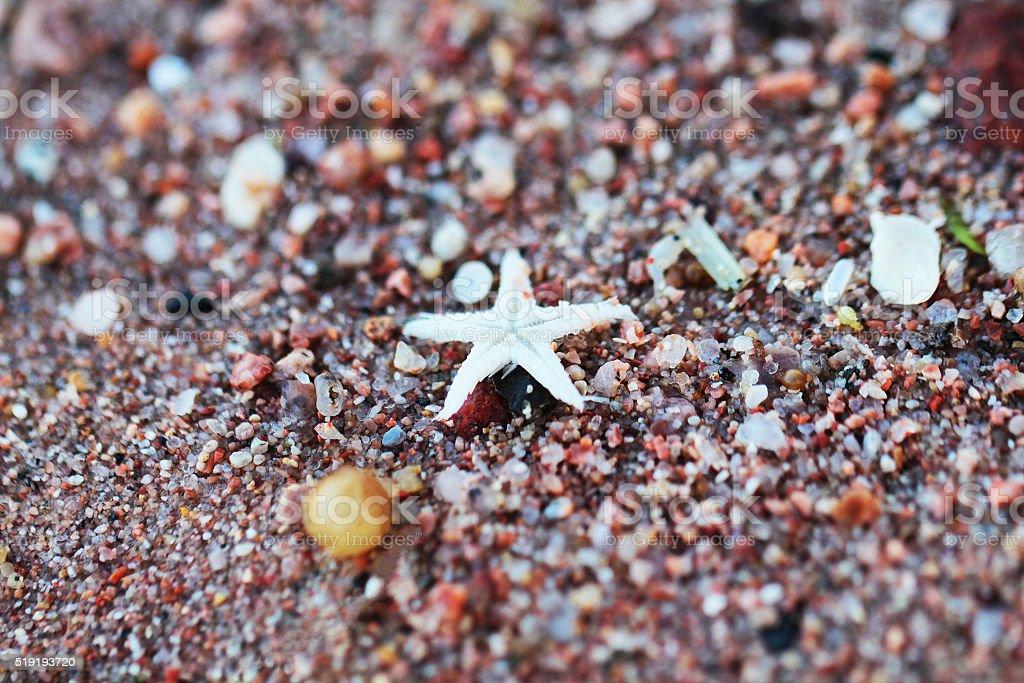 Small sea star on sand stock photo
