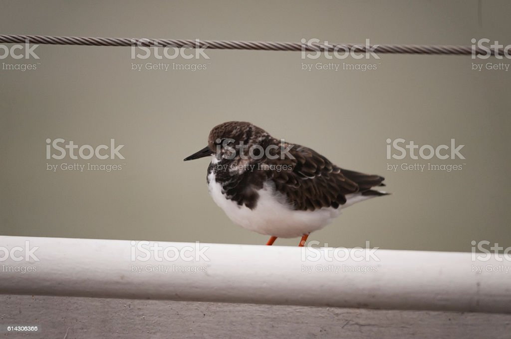 Small Seabird stock photo