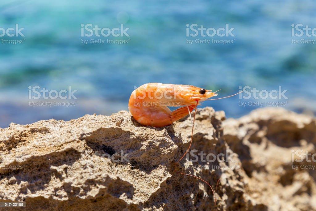 Small shrimp stock photo