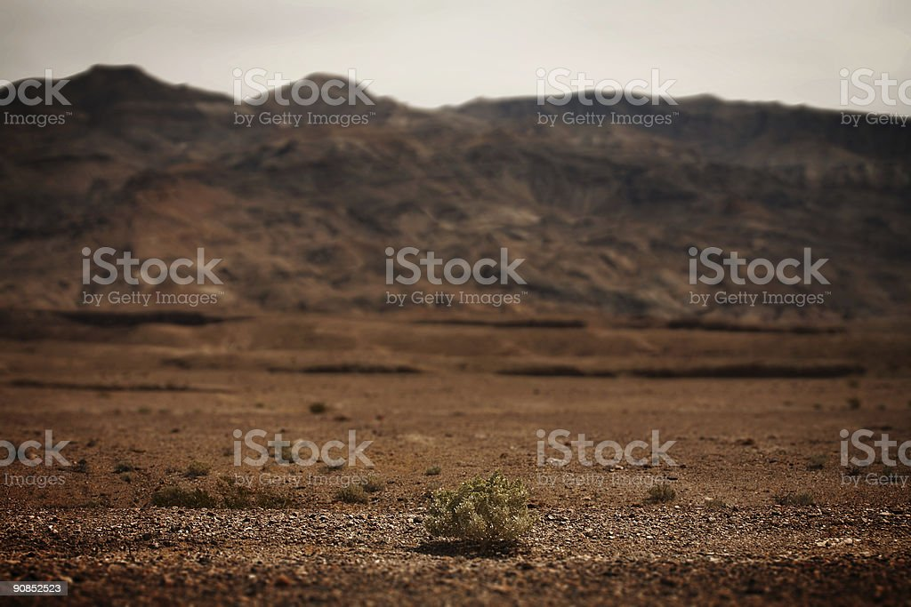 Small Shrub in Death Valley National Park stock photo