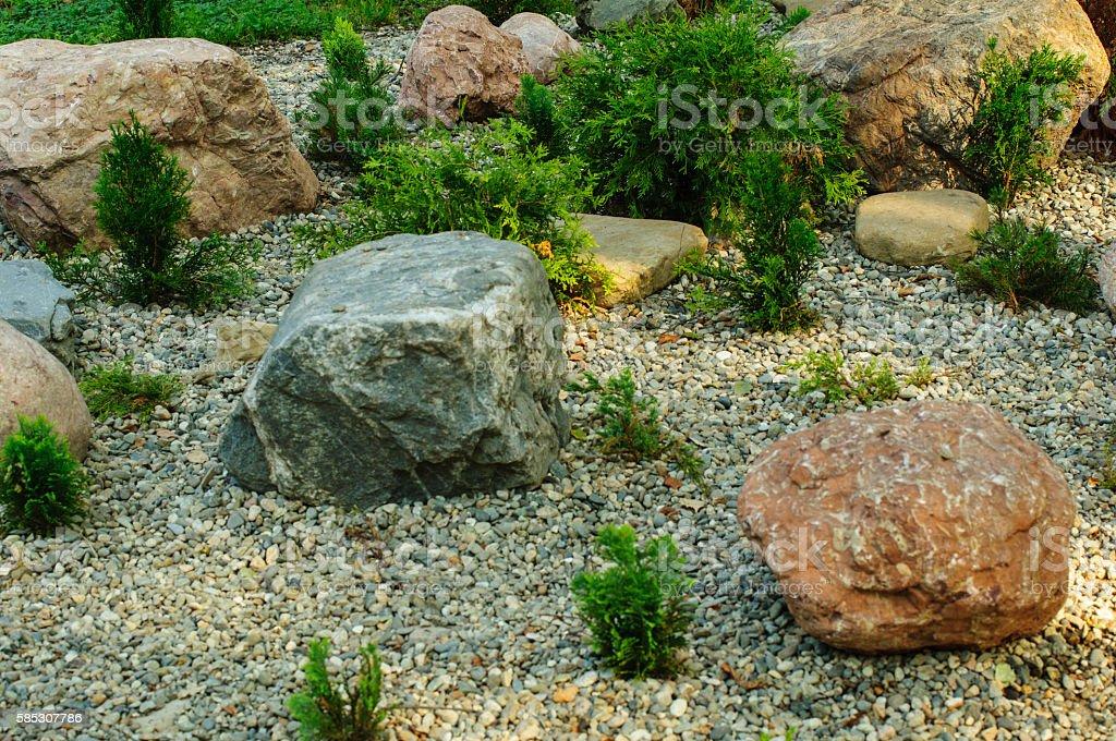 small shrub of thuja in the yard. stock photo