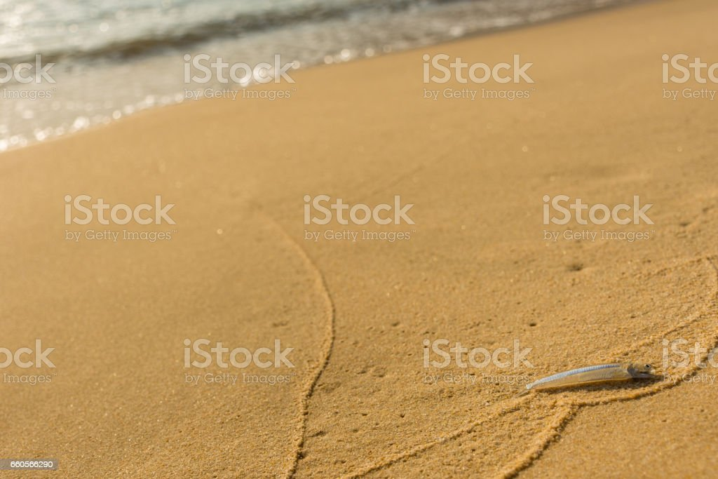 Small single transparent fish washed ashore on a golden sand beach. stock photo