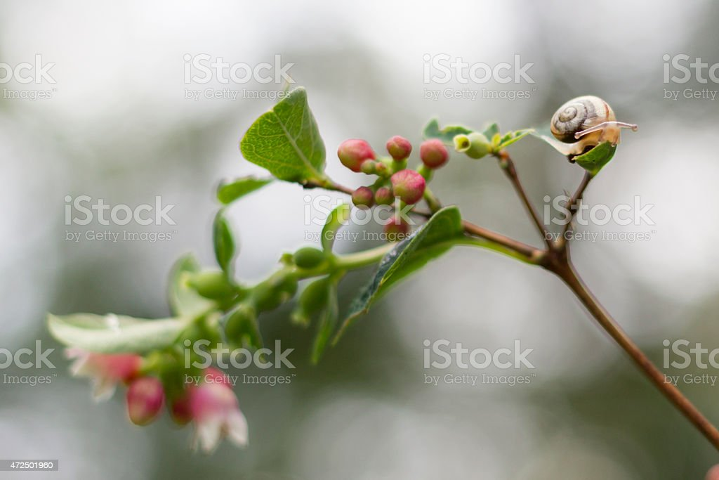 Small Snail on a Leaf stock photo