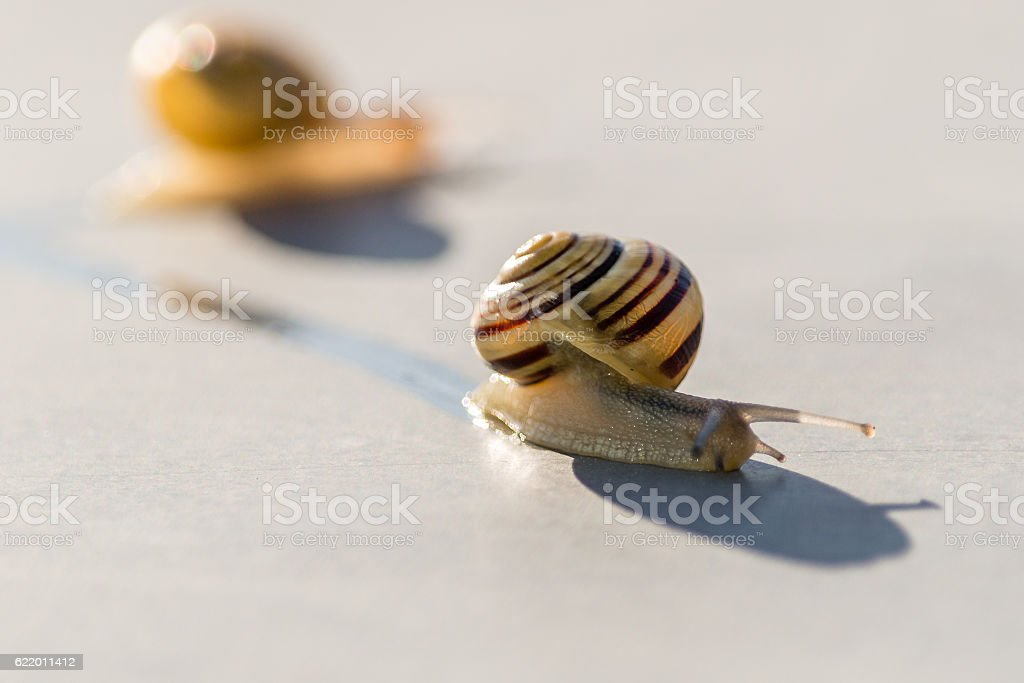 Small snails moving stock photo