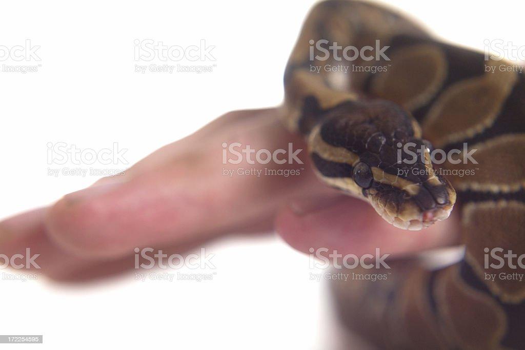 small snake stock photo