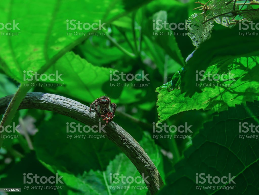 small spider has caught a fly royalty-free stock photo
