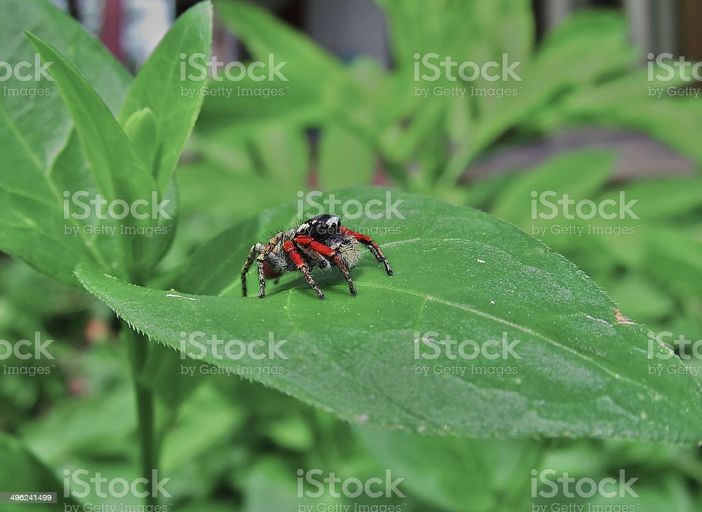 small spider royalty-free stock photo