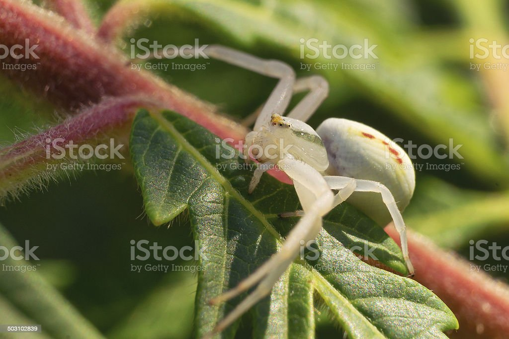 Small Spider stock photo