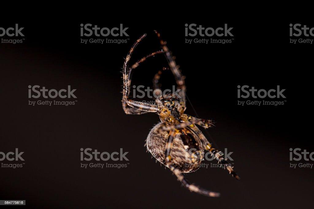 small spider stock photo