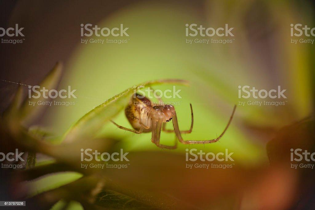 Kleine spider Lizenzfreies stock-foto