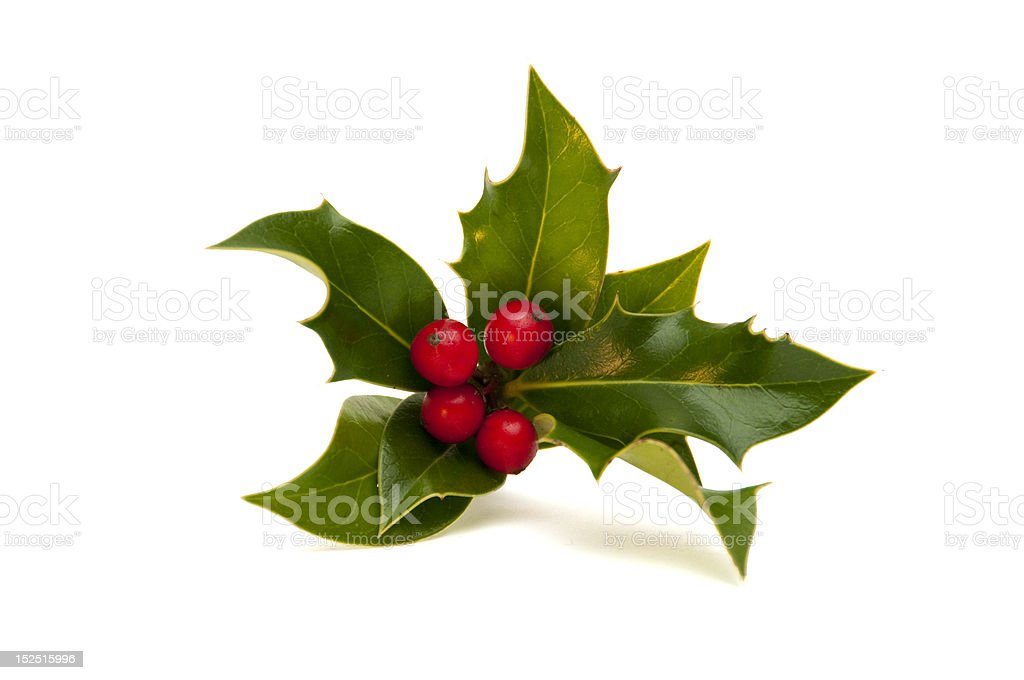 Small Sprig of Holly stock photo