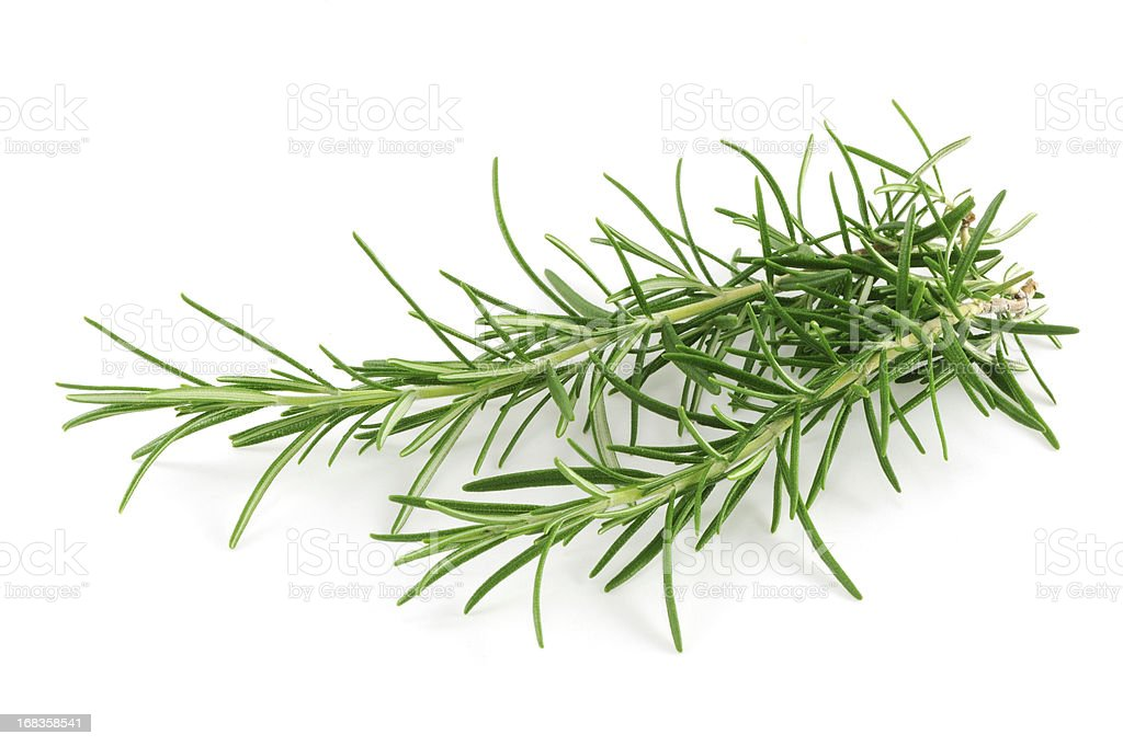 Small sprig of Rosemary herb isolated on a white background. stock photo