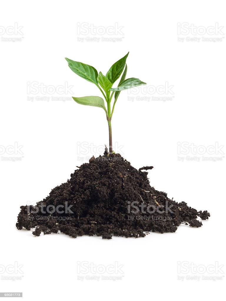 Small sprout in clump dirt on white surface stock photo