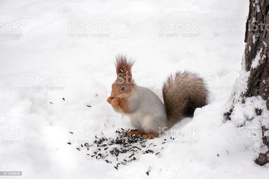 Pequeno Esquilo alimentação foto de stock royalty-free