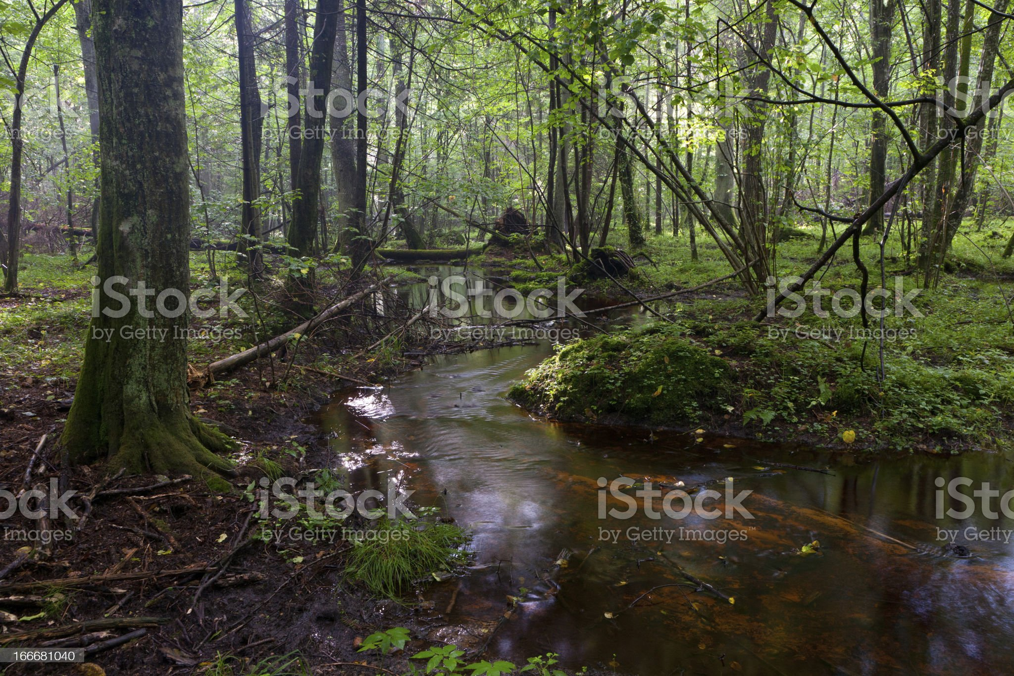 Small stream flowing in forest royalty-free stock photo
