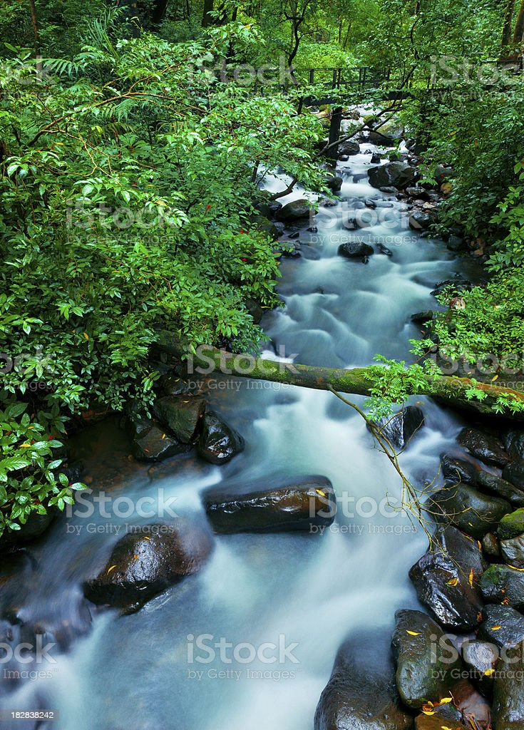 small stream running across costa rican forest stock photo