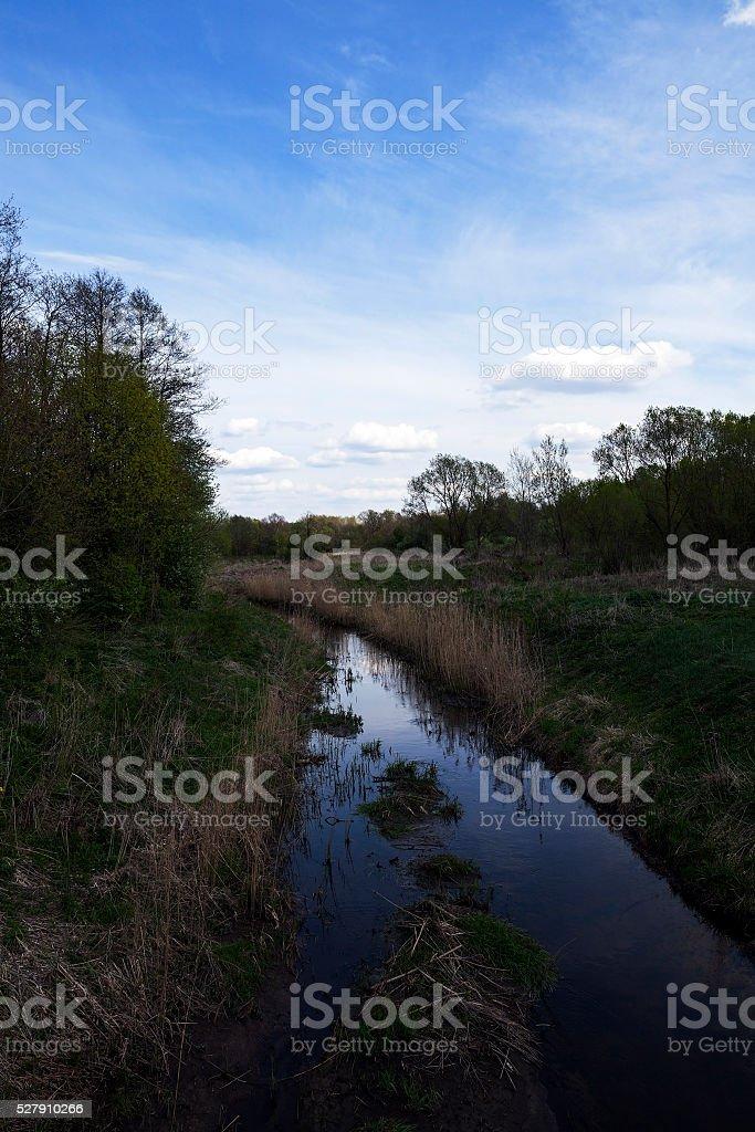 small swamp, lake stock photo