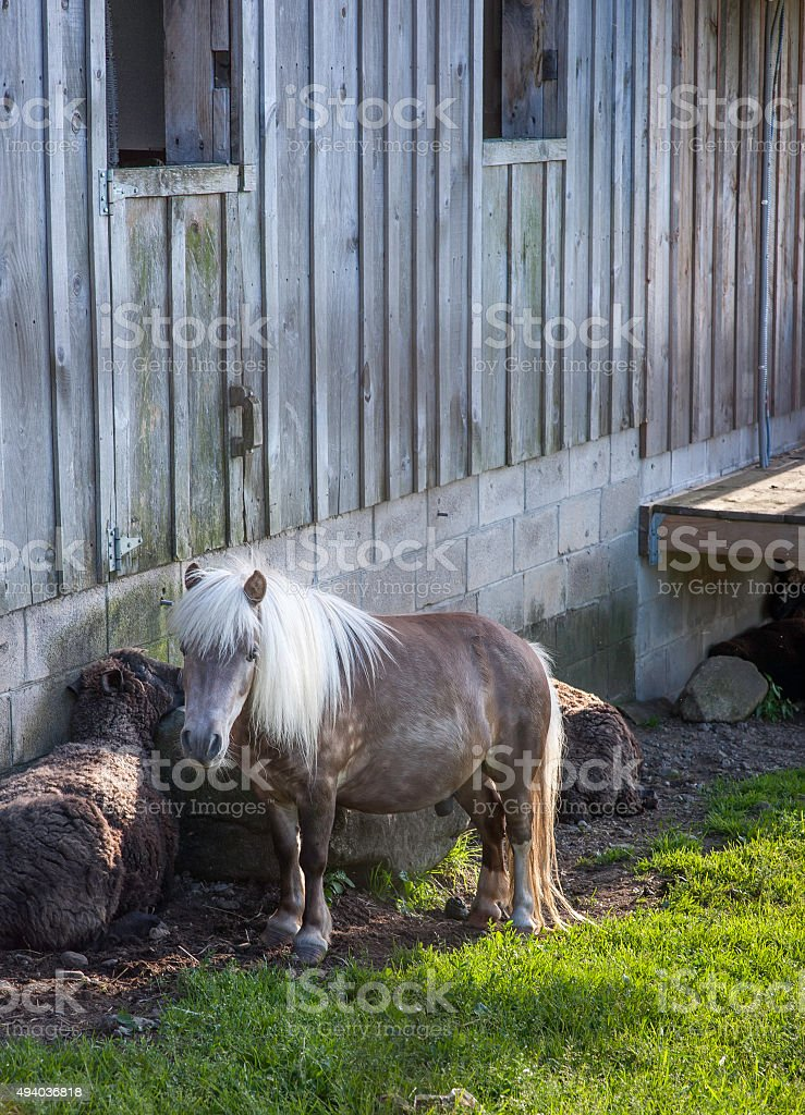 Small Tough Horse stock photo