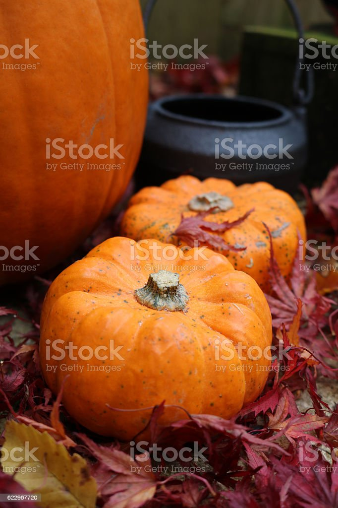 Small trail of pumpkins leading to cauldron stock photo