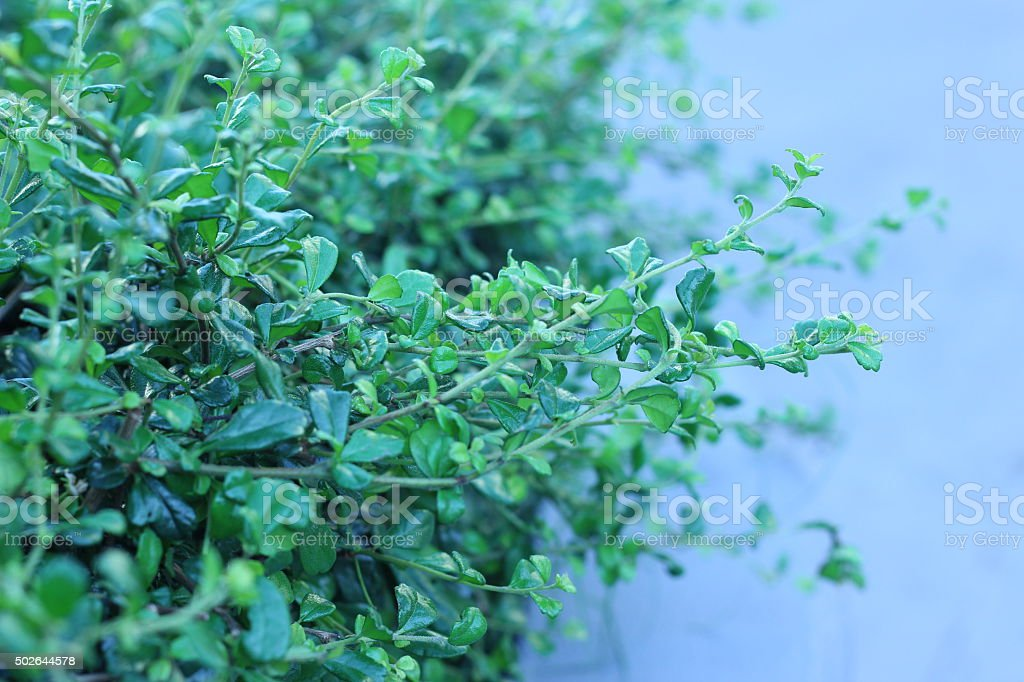 Small tree branches adjacent densely beautiful green background stock photo