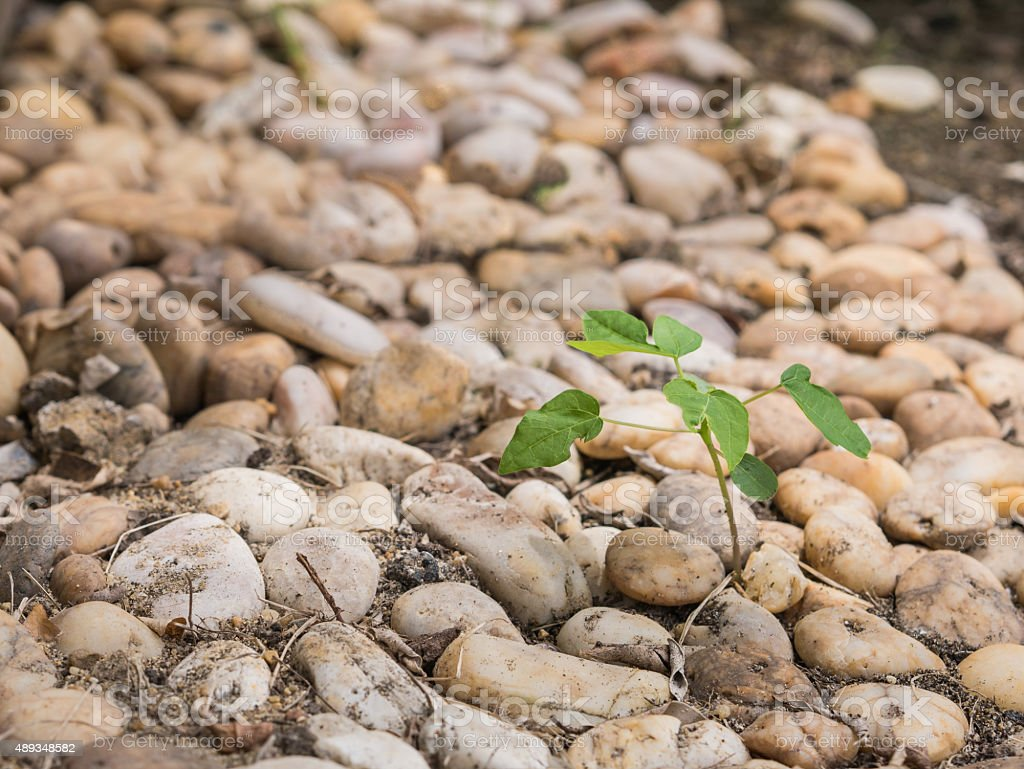 Small tree growing among stack of small rocks. royalty-free stock photo