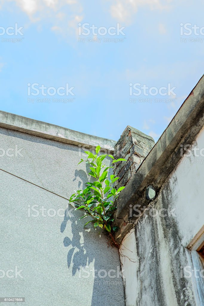 Small tree  growing on crack stock photo