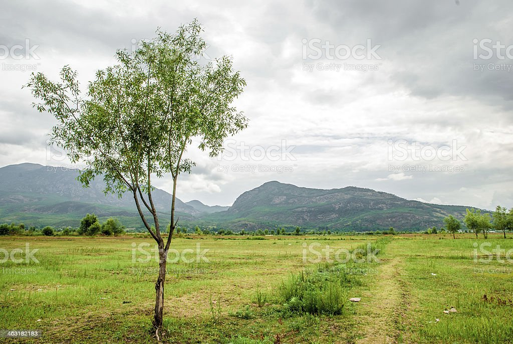 small tree growing on the plateau stock photo