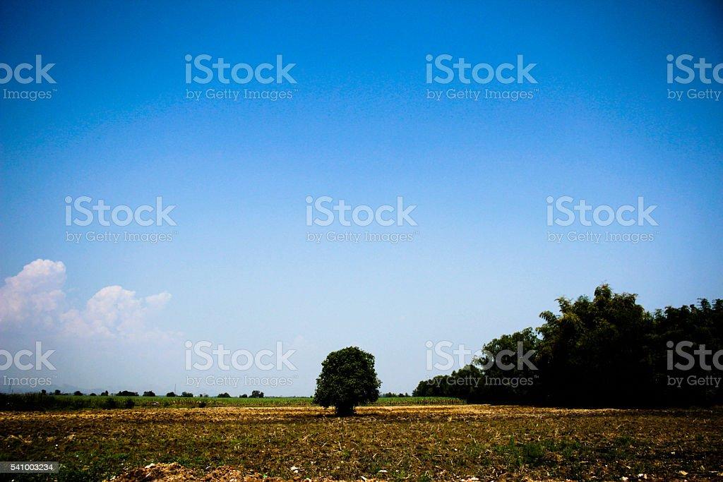 small tree in asia farm stock photo