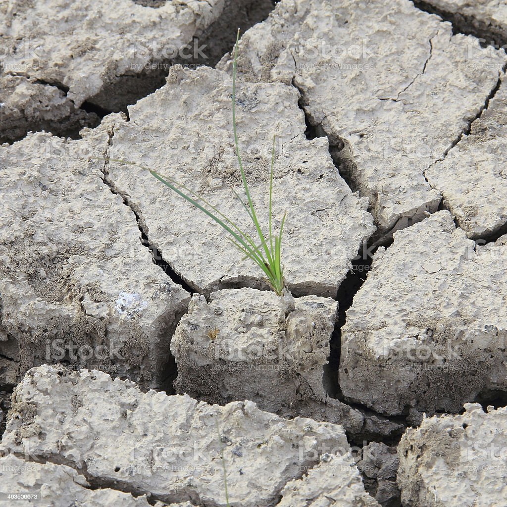 Small tree in crack soil royalty-free stock photo