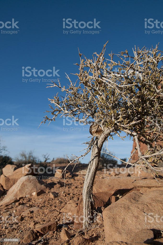 Small Tree in Desert royalty-free stock photo