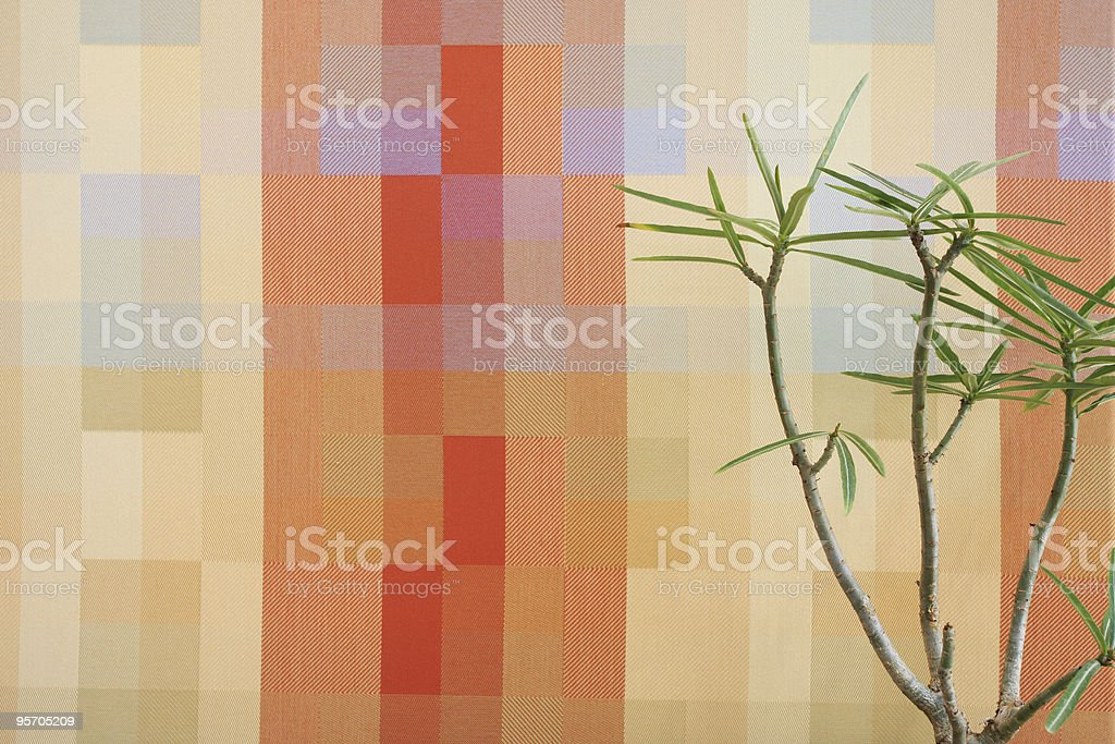 Small tree in office stock photo