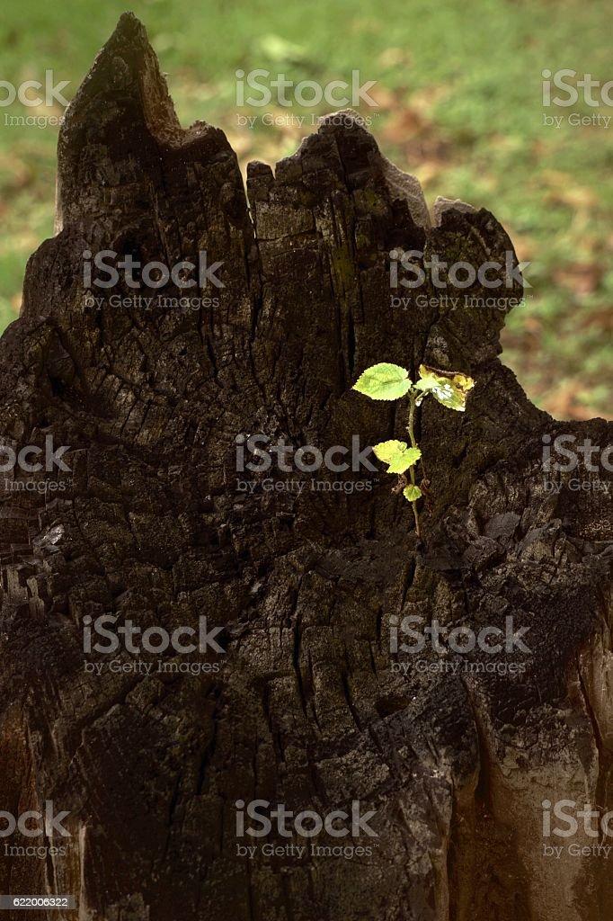 Small tree on dead big tree royalty-free stock photo