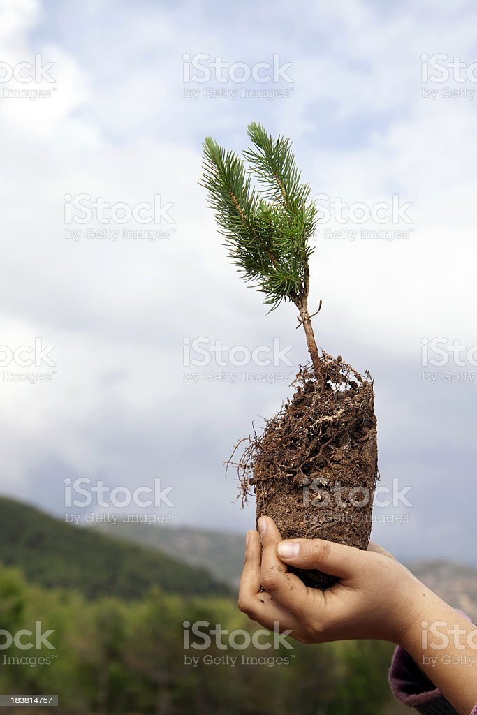 Small tree stock photo