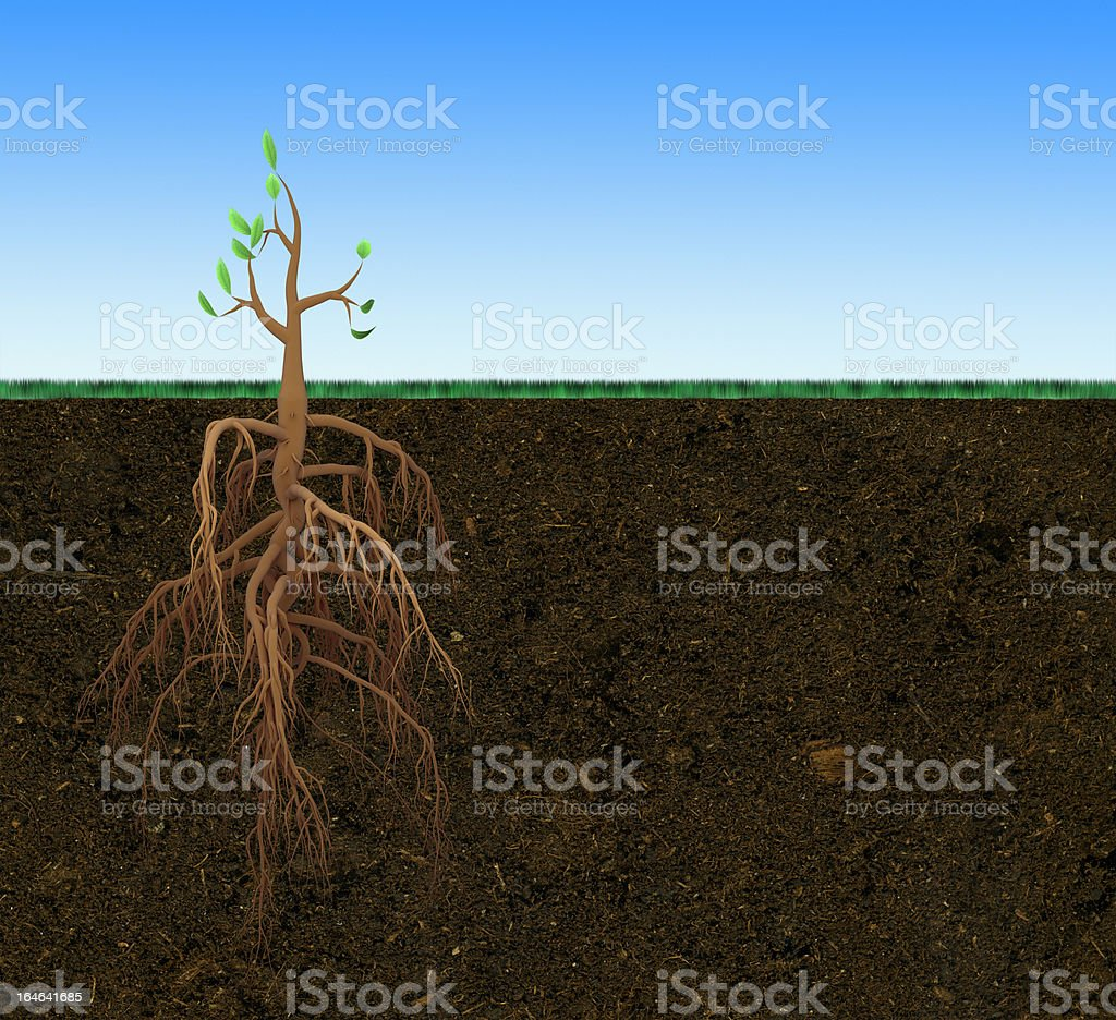 Small tree with large root royalty-free stock photo