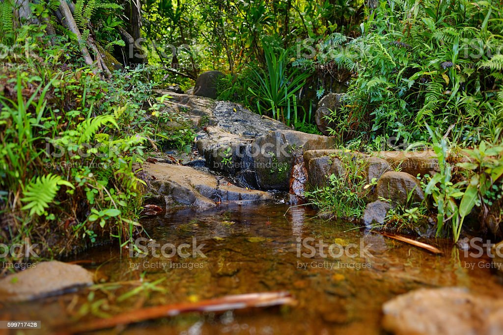 Small tropical river or stream stock photo