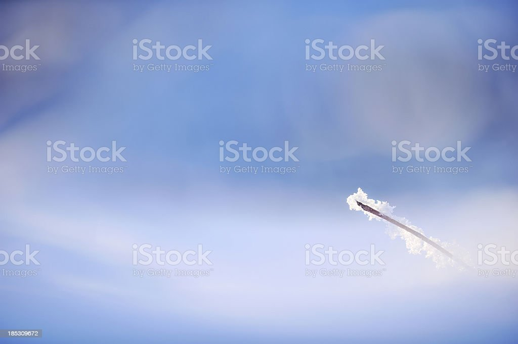 Small twig in snow royalty-free stock photo