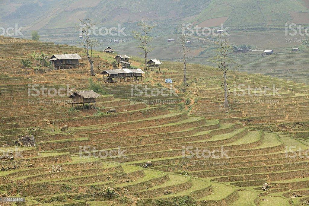 Small village on paddy field stock photo