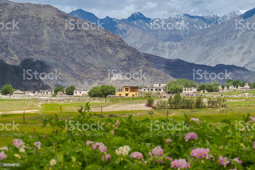 Small village on the way to Pangong lake, Leh-Ladakh stock photo