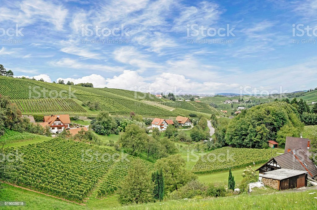 small village with vineyards in summer stock photo