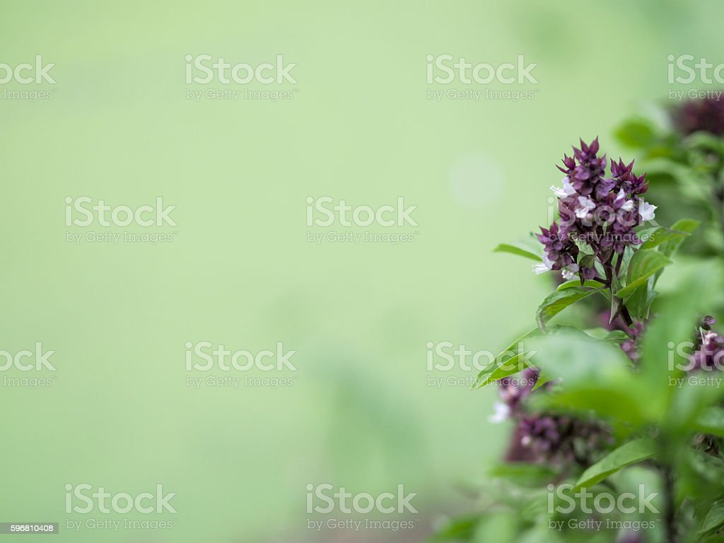 small violet flower stock photo
