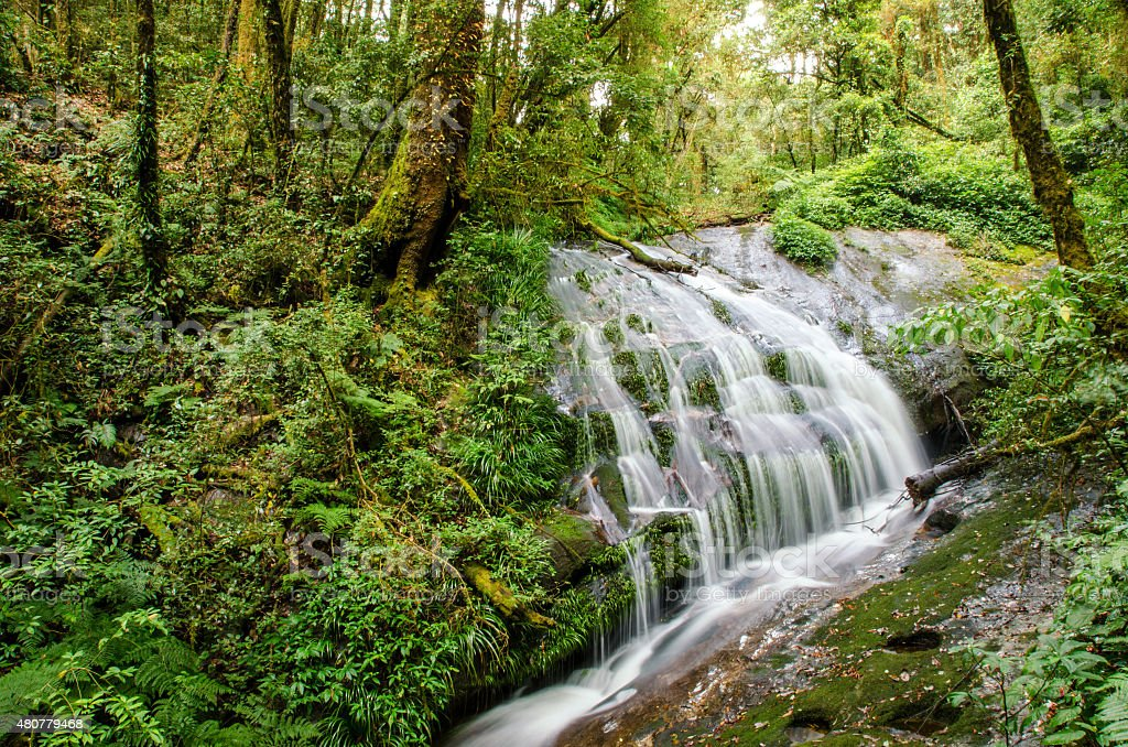 small waterfall in deep forest stock photo