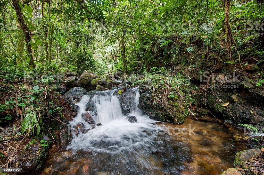 Small waterfall in the dark forest. stock photo