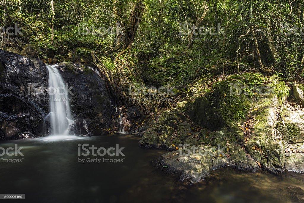 Kleiner Wasserfall im Wald Lizenzfreies stock-foto