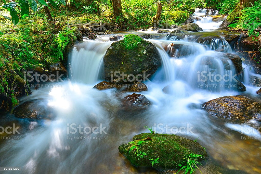 Small waterfall with fern and rocks located in Doi Inthanon. stock photo