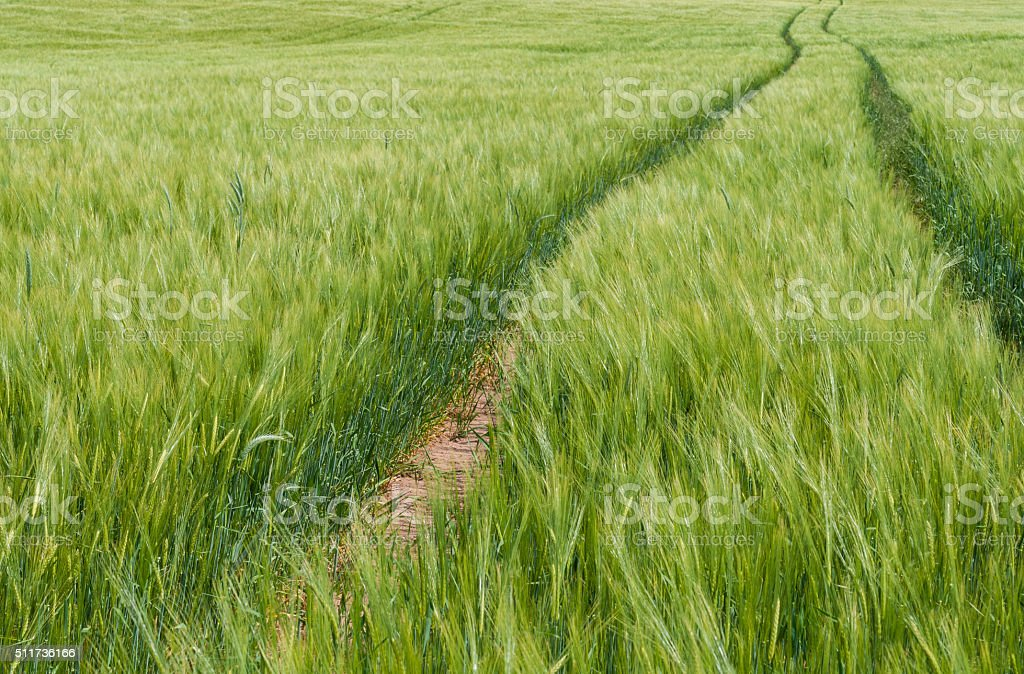 small way in the field - lane in field stock photo