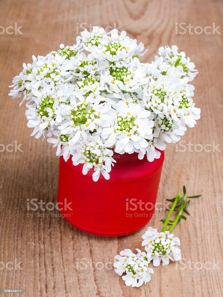 small white flowers in a red jar on wooden background stock photo