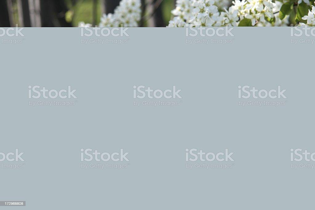 small white flowers stock photo